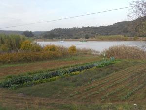 Flera avundsvärda odlingar ner mot gränsfloden Guadiana
