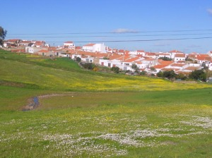 Även om det är höst växer det massor av små gula och vita blommor på ängarna mot Póvoa