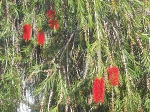 Lustiga blommor. Vet inte vad det är för träd