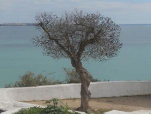 Jag kunde inte låta bli att fotografera det här trädet på udden. Det mörka grenverket var så vackert mot hav och himmel