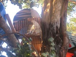 Det finns tre vita duvor. kvällstid stängs de in i varsin bur. Övrig tid vistas de fritt.
