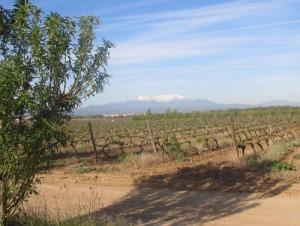 En sista utblick över en av vingårdarna, innan vi åker vidare