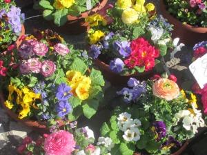 Blommorna lyste ikapp med solen