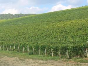 Vinfälten är enormt stora
