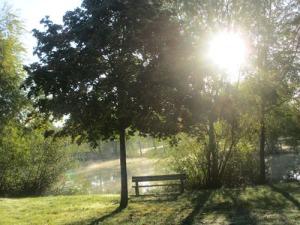 Morgondimma över sjön