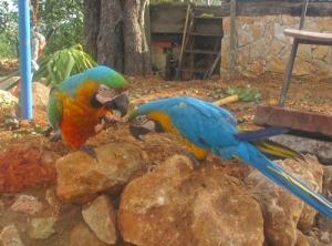 De två papegojorna, som nu är borta :-(