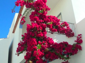 Har sällan sett blommorna sitta så tätt!