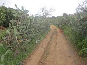 Bäst att hålla sig på vägen mellan kaktushäckarna!